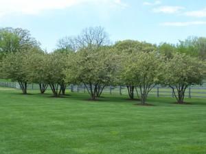 Lawn Fertilizing Grand Rapids